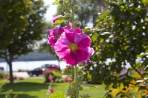 Ephraim Shores - season of blossoms