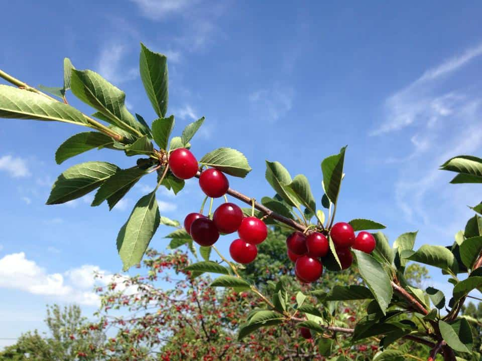cherries - Ephraim waterfront resort Ephraim Shores